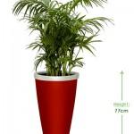 Valentino 40cm Height: 77cm