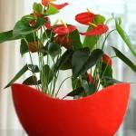 Kintra bowl