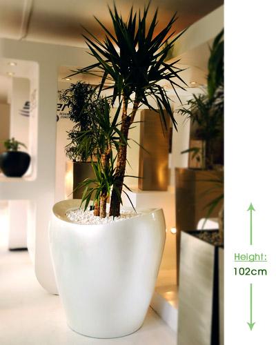 Gaia large 70cm Height: 102cm