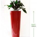 Bellini round XL 32cm Height: 120cm