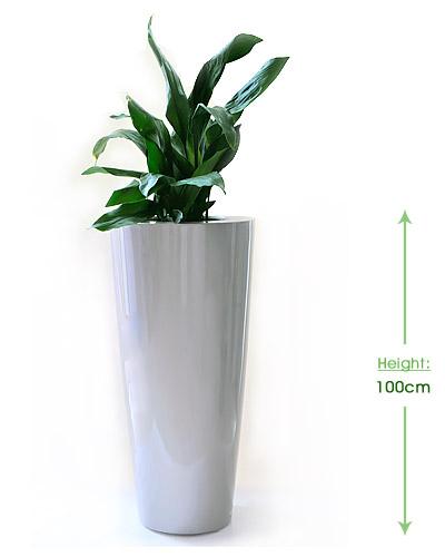 Bellini round L 32cm Height: 100cm