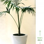 Bellini round S 40cm Height: 40cm