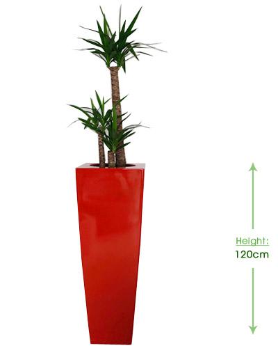 Bellini square XL 32cm Height: 120cm
