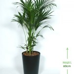 40cm tapered planter Height: 60cm